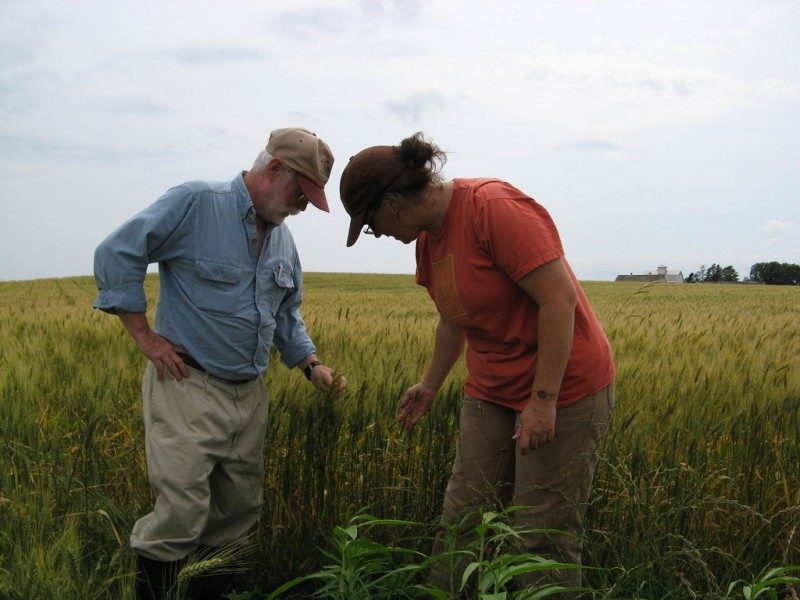 Molly Breslin and her father inspecting a field of rye