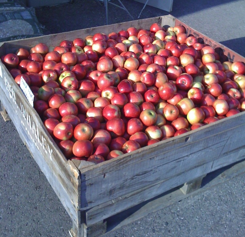 large bin filled with apples