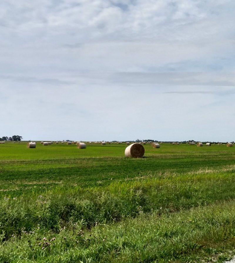 Janie's Mill farm