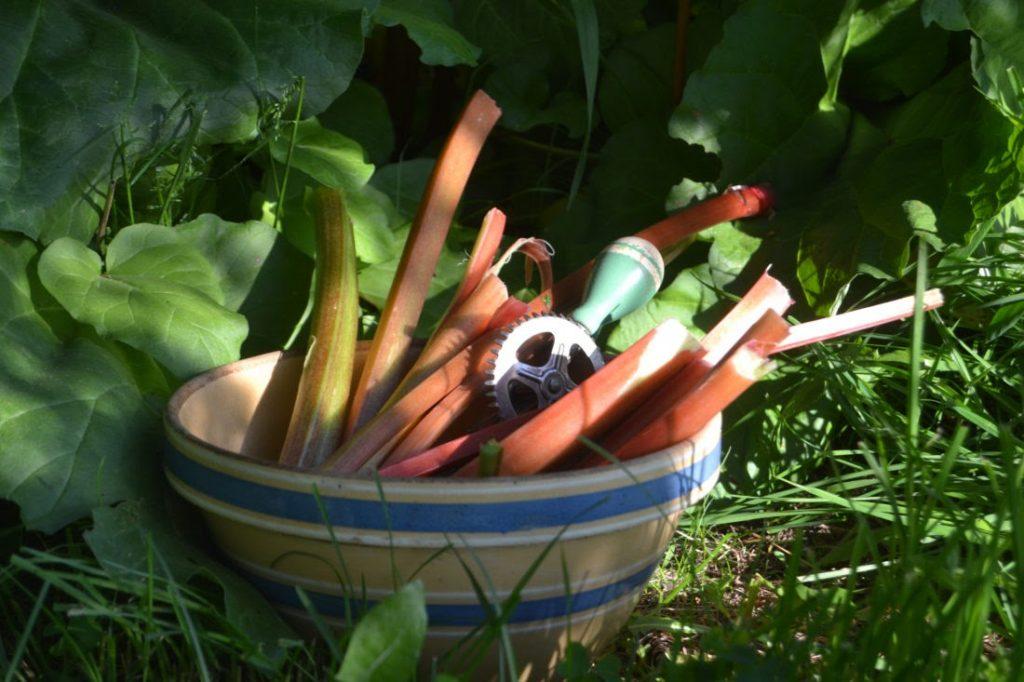 rhubarb in a bowl